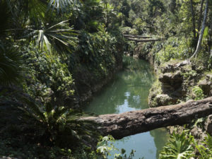 Cenote K'áak' puerto morelos