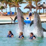 nado con delfines tour familiar cancun
